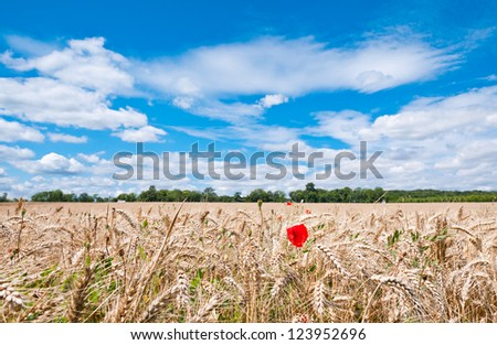 Summer Landscape with Wheat Field and Clouds in France