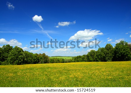 summer landscape with yellow field