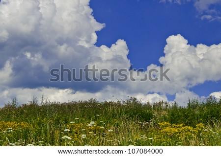 summer meadow #107084000