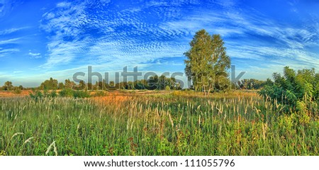 Summer meadow at sunset - stock photo