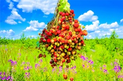 Summer meadow bunch of ripe berries. Bunch of ripe berries in summer. Summer bunch of ripe berries view