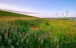 Summer meadow flowers in evening. Evening summer meadow flowers. Meadow red flowers in summer evening