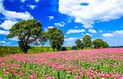 Summer meadow flowers trees landscape. Summertime meadow flowers view. Meadow flowers in summer