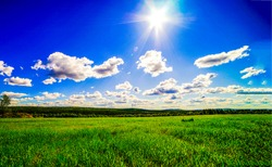 Summer meadow in sunny day. The sun is shining brightly over a green meadow. Meadow sun