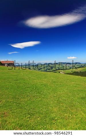 Summer Meadow in Switzerland