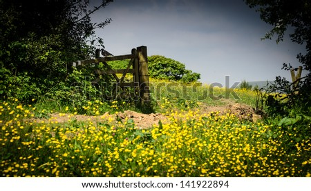 Summer meadow int he UK with buttercups and an old wooden gate with pigeon on.