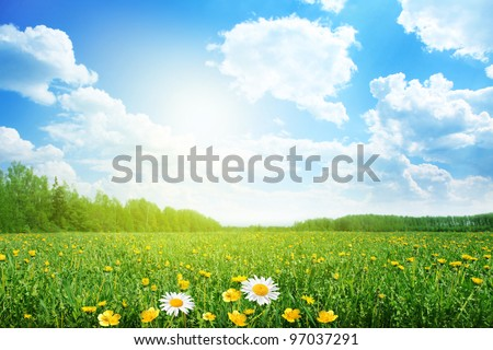 Summer meadow on bright sunny day. #97037291
