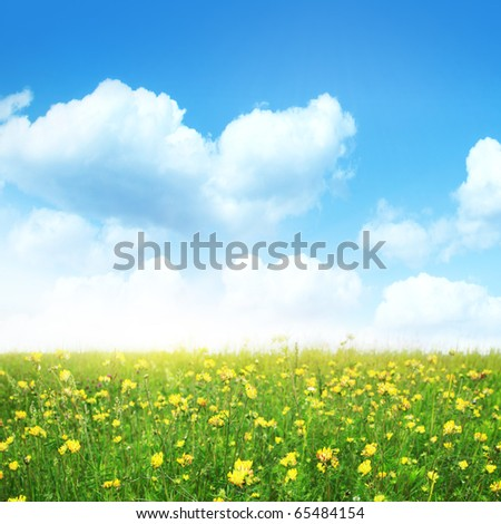 Summer meadow on sunny day.