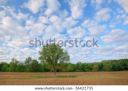 Summer meadow shortly after sunrise with golden grasses and beautiful clouds overhead, Michigan, USA