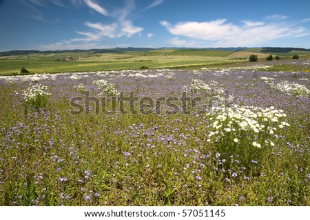 Summer meadow with flowers and blue sky
