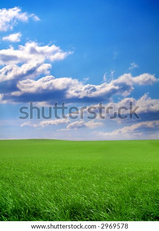 summer meadow with fresh green grass and a blue sky