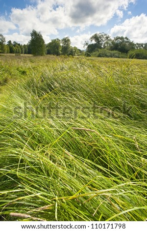 summer meadow with high grass - stock photo