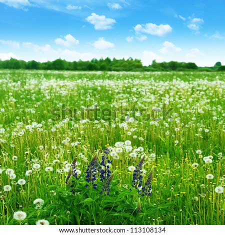 Summer meadow with wildflowers under blue sky.