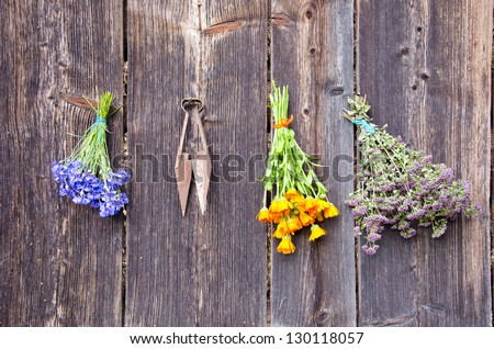 summer medical herbs fresh bunches on old wooden wall