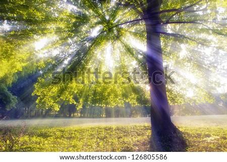 Summer morning lights under a huge tree