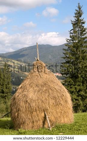 Summer mountain green meadow with stacks of hay (Carpathian Mt-s, Ukraine).