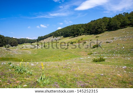 Summer mountain landscape