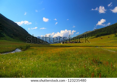 Summer mountain landscape in Sertig Dorfli village with a meadow in the foreground, Davos, Switzerland