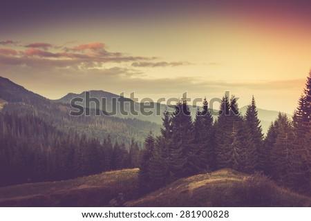 summer mountain landscape....