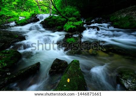 Summer mountain stream in Ichinoseki City, Iwate Prefecture #1446871661