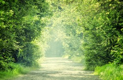 Summer natural background, landscape with stone blocks road and tunnel through the trees in a forest or park, purposely blurred image, imitation of painting, selective focus