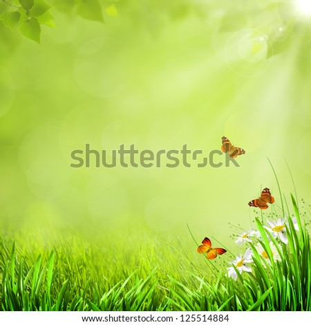 Summer natural backgrounds with beauty butterfly for your design