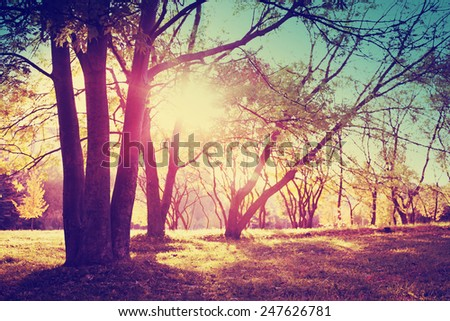 Summer nature landscape/ Retro summer scene