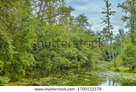 Summer of 2016: Krutynia River near to Babięta, Masurian Lake District, Poland. In water blooming many yellow water lilies (Nuphar lutea) - in Polish 'grążel żółty'. Zdjęcia stock ©