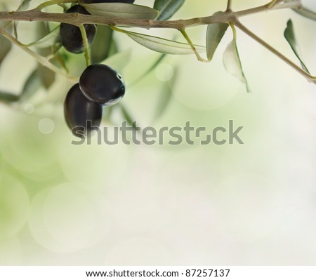 Summer olives design background with fresh olive branch and bokeh lights