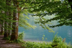 Summer on the lake Bohinj in Slovenia, green trees in the foreground and turquoise water surface in the background, idyllic nature wallpaper