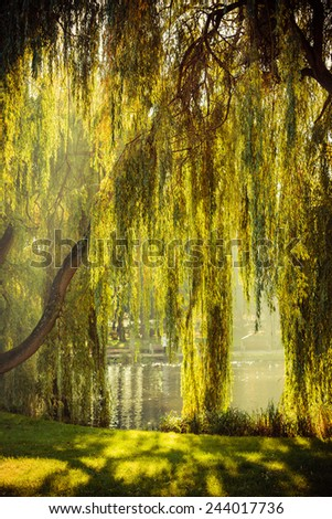 Summer or early autumn park with pond or river and weeping willow trees on the shore