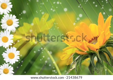 Summer or spring background with bright, colorful green stems, daisy and yellow flowers, sparkles