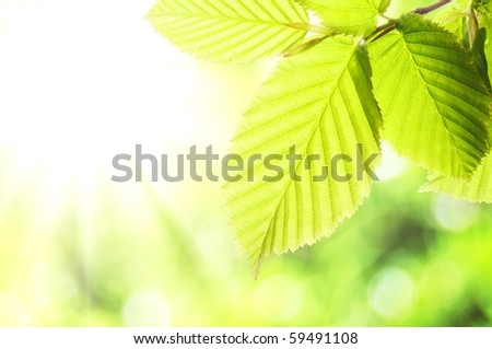 summer or spring nature concept with green leaves and bokeh