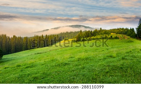 summer panoramic landscape. fog from conifer forest surrounds the mountain top in morning light #288110399