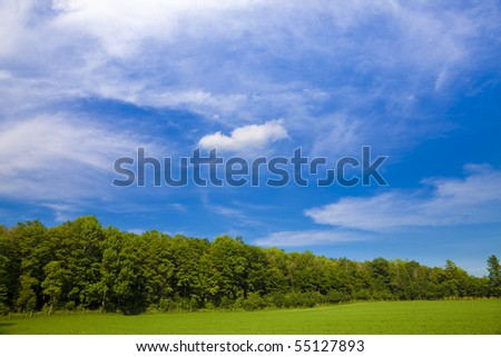 Summer pasture with blue skies and clouds. Space for text