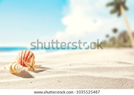 Summer photo of beach and shell decoration.  #1035525487