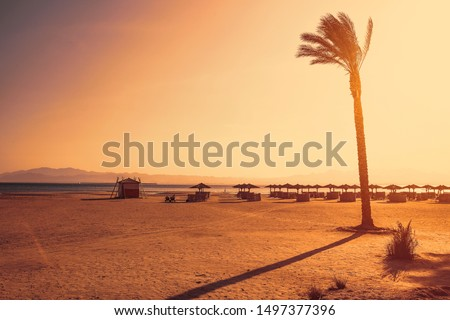 Summer photo of beach with palms and ocean landscape. Sunset time. Free space for your decoration.  #1497377396
