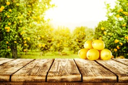 Summer photo of wooden table with fresh lemons fruits and trees with sun light.