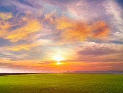 Summer  pink sunset sunlight   beams  at blue sky  green grass field pink yellow cloudy sky nature landscape  background