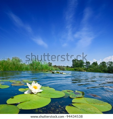 summer river with lilies