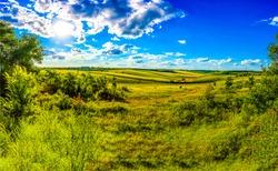 Summer rural field horizon landscape. Rural summer meadow field view. Summer meadow landscape