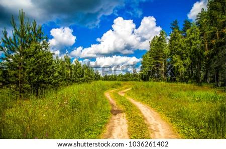 Summer rural forest road landscape #1036261402