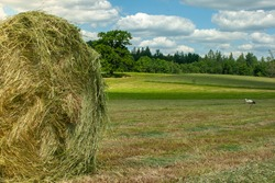 summer rural grassland with stork under the theme of working in the field and making large bales of hay for livestock
