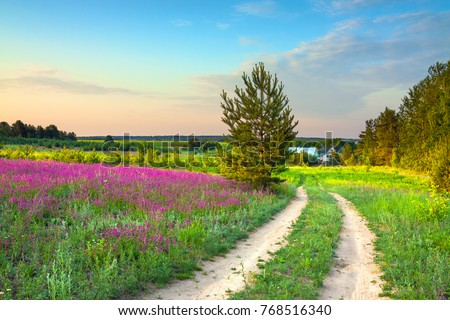 summer rural landscape with a blossoming meadow, road and a farm. spring wild flowers on a field.  purple flowers on a meadow and  sunset.  flowering field wildflowers and farmhouse on sunrise.