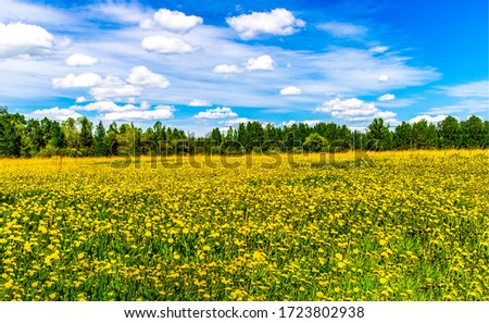 Summer rural meadow flowers landscape