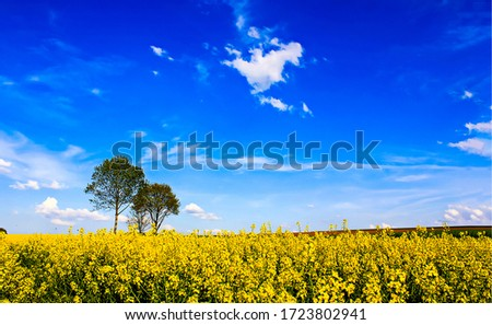 Summer rural meadow flowers trees landscape