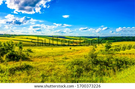 Summer rural nature field landscape. Summer meadow field panorama. Rural summer meadow field view