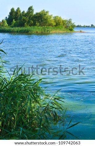 Summer rushy lake view with small grove on shore
