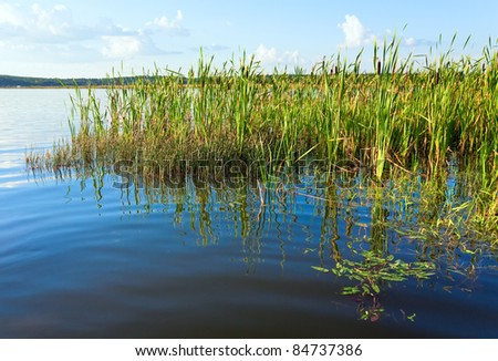 Summer rushy lake view with some plants on water surface