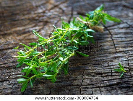 Summer savory (Satureja hortensis)  Photo stock ©